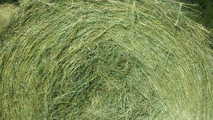 GREEN HAY, NO RAIN, 550LB AND 1400LB!  BLOWOUT ON LAST HAY!
