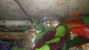 2 fire belly toad w/ 10 gallon tank