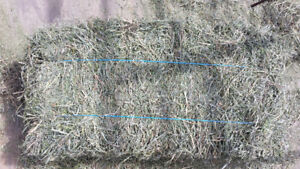 Lab Tested Small Square hay