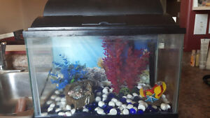 5 gallon fish tank with decorations