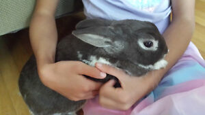 Affectionate bunny rabbit....Free to good home