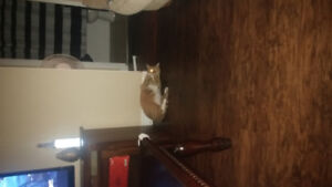 So Cute and Docile 2 year Old Cat