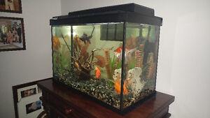 20 gallon fish tank, gold fish, and decoration