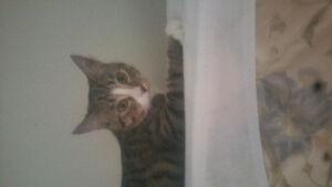 lost kitten ***reward if find***, lost around edmonton southside