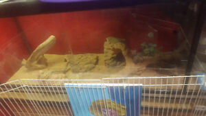 3 Bearded Dragons & Everything