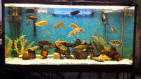 75 gallons Aquarium for sale