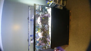 Saltwater Reef Aquarium for sale