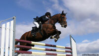 Experienced Showjumping Groom Required