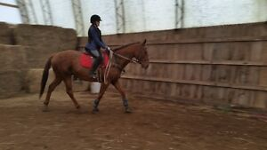 Riding lessons with certified coach indoor arena Belleville Belleville Area image 2