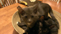FREE - Adorable kittens ready to go to a good home!