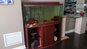Showstopper - 76 gallon bow front fresh/saltwater glass aquarium