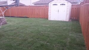SOD special $1.50/SQFT FLAT RATE & FREE SPRINKLER London Ontario image 6