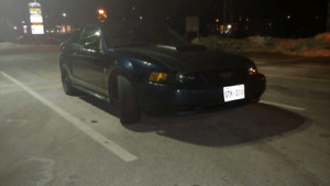 2001 ford mustang 5 speed (BLACKED OUT!!!) Lic and insp!!!