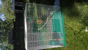 Large Rat Cage with accessories