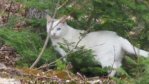 Deaf cat looking for home (free)