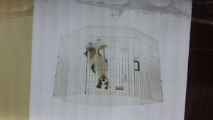 newer - dog fence crate