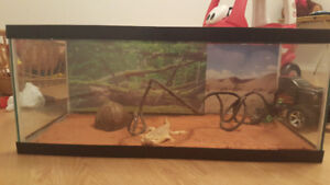 Bearded Dragon with 30 gallon tank and accessories