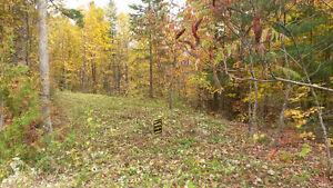 Terrain boisés de 2,5 acres a Cantley.  Prêt a construire