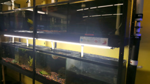 Fish breeding system/selling system