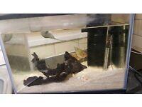 Fish tank with 3 paranas