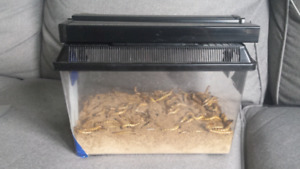 Bearded Dragon food plus container