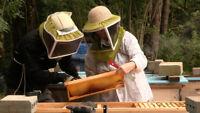 Natural Beekeeping for Beginners