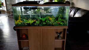 90 gallon Fish Tank with oak stand
