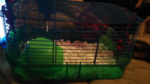 .9  week Syrian hamster and cage.    Price firm