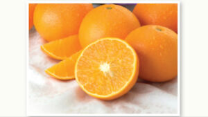Fresh oranges-direct from the farm