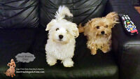 Cage-free home daycare for small dogs run by certified trainer