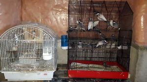 Selling birds and cages