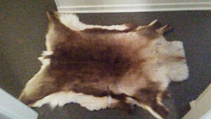 Large deer pelt