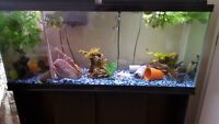 complete 55 gallon fish tank and stand