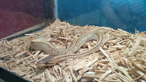 Reefs N Reptiles  snakes and more