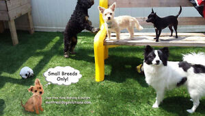 Sitting for small friendly dogs home of certified trainer+CPR West Island Greater Montréal image 2