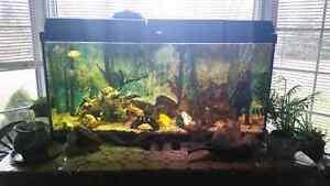 90 gallon fish tank Windsor Region Ontario image 2