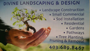 TREE PRUNING - TREE REMOVAL - STUMP REMOVAL - GARBAGE REMOVAL