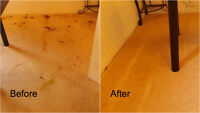 Affordable Carpet Cleaning 7804990985