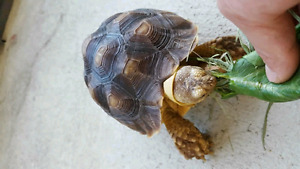 Will take  unwanted tortoise