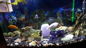 2 Aquarium à vendre