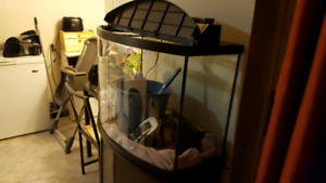 Fish tank with stand and lots of esesories.