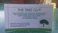 The Tree Guy. Trees hedges grass and more. Hamilton area.