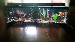 125 gallon fish tank with African cichlids for sale