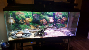 Ball python tank and all accesories