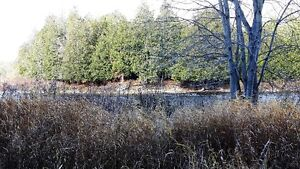 PRIME LOCATION! 47 ACRES ON SAUGEEN RIVER London Ontario image 8