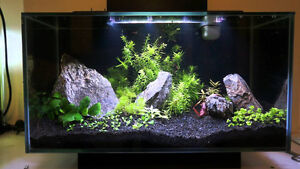 fluval Fish Tank London Ontario image 3