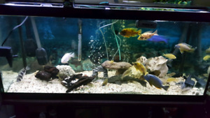 4sale 110gallon fish tank with gravel, light and heater.