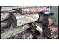 Free logs of dry woods