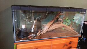Complete setup for reptile