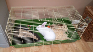 Bunny for sale. Price is firm****